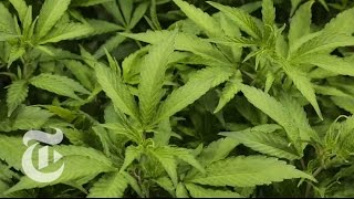Colorado (Weed) Documentary HD Guns, (Drugs) and Money