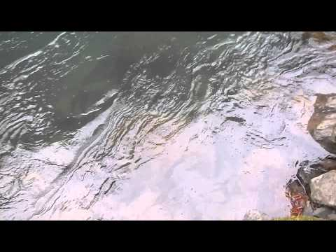 Steelhead Fishing #1