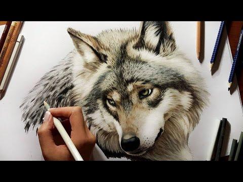 Pencil Drawing: Grey Wolf Speed Draw | Jasmina Susak How to Draw a Wolf