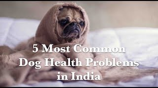 Common Dog Health Problems in India