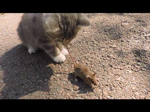 ловят мышей прикол видео