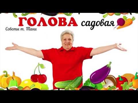 Голова садовая - ЭКСКЛЮЗИВ! Как посадить картофель