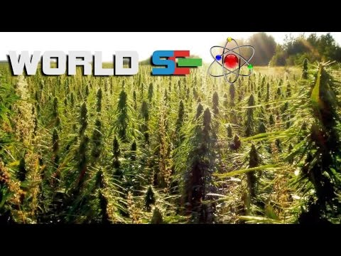 Раскрыта правда о марихуане (конопле) (Запрещенный фильм)