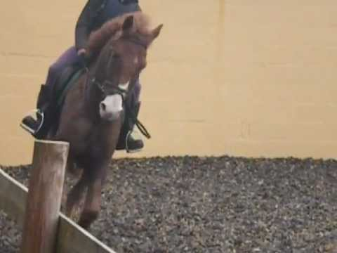New Pony Iolo Xxxxxxx video