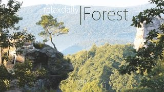 download lagu Light  - Relaxing Instrumental Music - Forest gratis