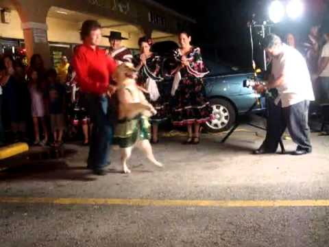 Salsa Dancing Dog.mp4 video