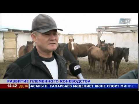 На юге Казахстана успешно развивается коневодство