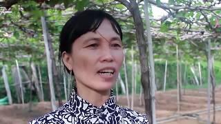 Ninh Thuận: Khỉ 3 chân xuống núi phá vườn nho, tấn công phụ nữ