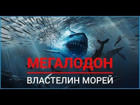 Мегалодон.  Властелин морей