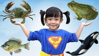 Trò Chơi Đi Săn Và Học Tên Các Con Vật ❤ AnAn ToysReview TV ❤