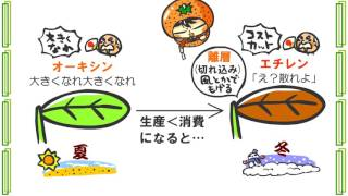 生物4章9話「植物ホルモン」byWEB玉塾