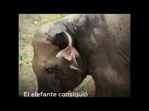 Wie ein Elefant aus einem Schlammloch gerettet wurde - Solidarität mit dem Genossen Elefant!