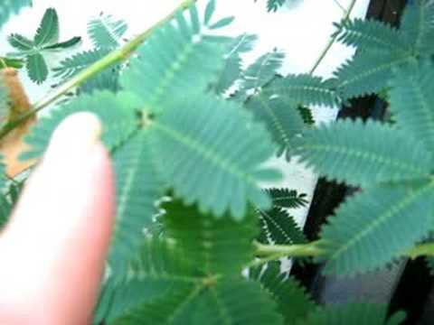 10 Rarezas y Curiosidades del reino vegetal.