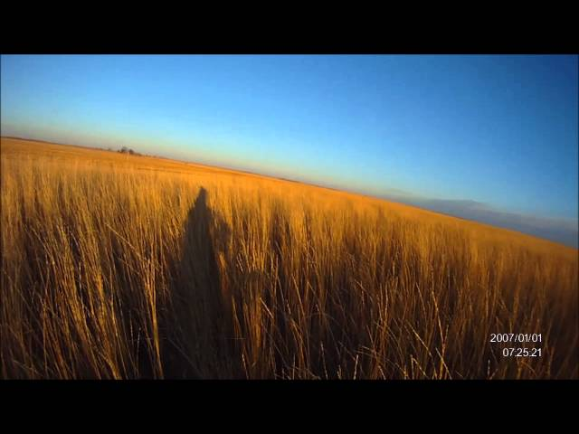 2013 South Dakota Pheasant Hunting with Helmet Cam