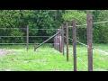 Cómo Instalar Cercas Eléctricas - TvAgro por Juan Gonzalo Angel