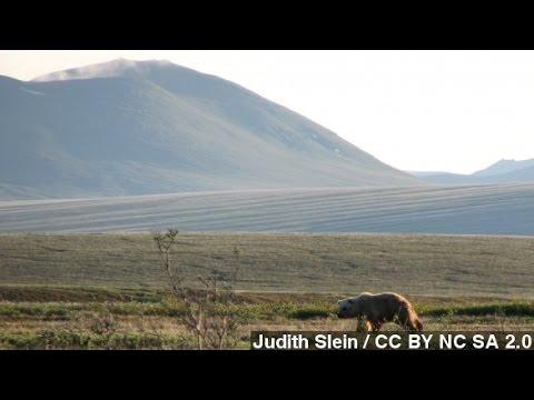 Obama's Wildlife Plan Renews Alaska Drilling Debate