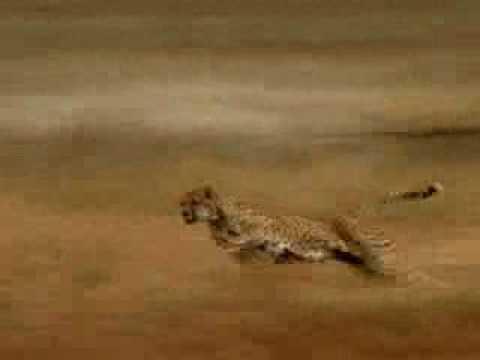 Njeriu me i shpejt se leopardi