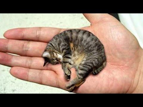 Die 5 Kleinsten Tiere Der Welt!