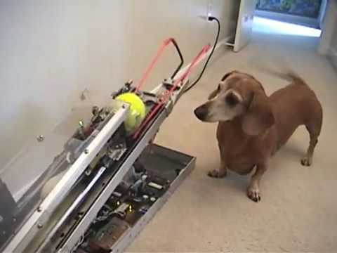 What happens when engineers own dogs