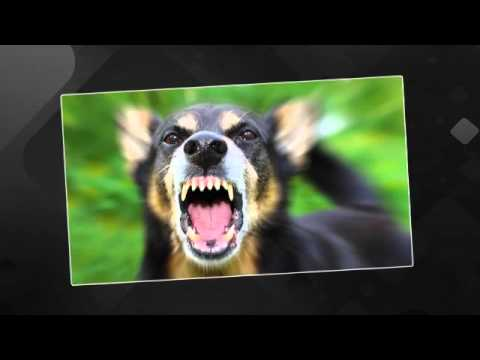 Dog Bites   Lincoln, CA - Sevey, Donahue & Talcott, LLP