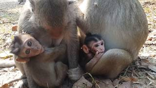 Monkey baby mother hated ,HD # 82