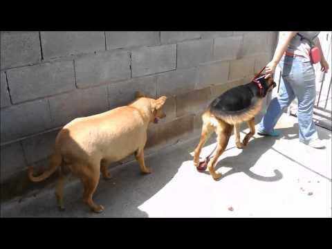 Animalinneed: Video of Raquel