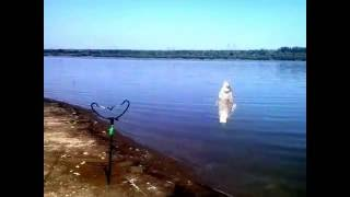 петродолинское одесса рыбалка