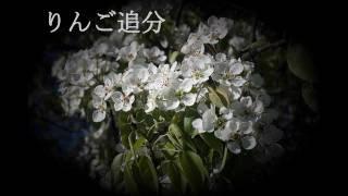 Hibari Misora Ringo No Uta