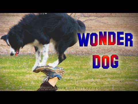 Nana the Wonder Dog: Amazing Dog Tricks