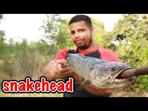 HEALTHY FISH FIRE FRY IN THE JUNGLE IN TYPICAL WEATHER CONDITIONS || ushhhh FISH FISH FISH FISH FISH