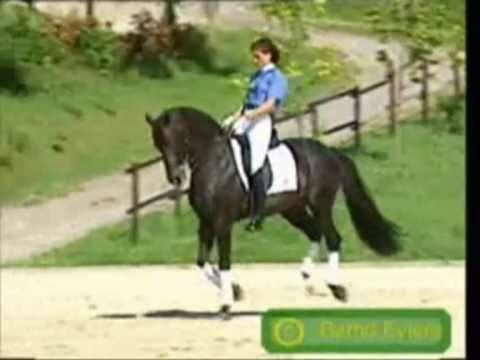 Faszination Pferde : Dressage, Springen & Freiheit