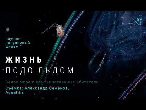 Жизнь подо льдом / короткометражный фильм