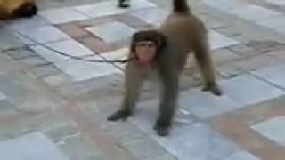 Mokey Dance best ever funny prank 2018