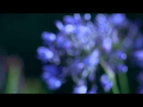 Johnny Hallyday - Jai Oubli De Vivre