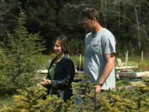 Your Green Life Segment - Grow Your Own Tree