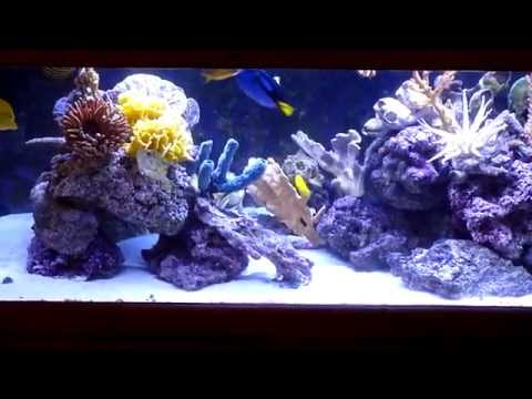 Decorative saltwater aquarium shows how colorful artificial corals can be.