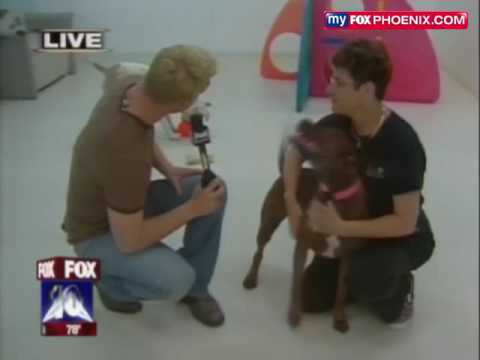 "FOX 10 News Visits Villa La PAWS for ""Be Kind to Animals Week"""