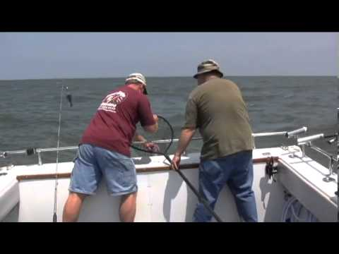 Walleye Fishing on Lake Erie