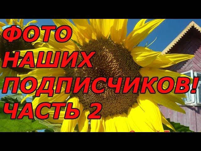 ФОТОГРАФИИ ПОДПИСЧИКОВ. Ч.2!