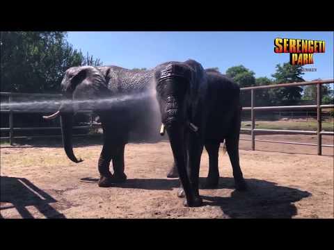 Spritziges Vergnügen bei den Elefanten im Serengeti-Park