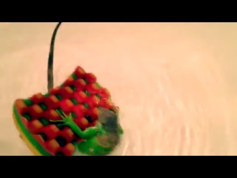 イグアナがスポンジにつかまるが何度もひっくり返る姿が可愛すぎな映像