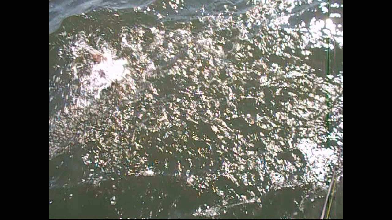 08 24 2014   Fluke Fishing 124 Fluke with 5 keepers