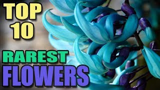 Top 10 Rarest Flowers In The World    Amazing World