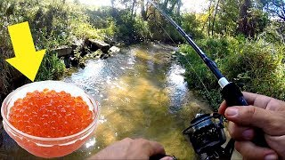 Electricity Fishing Big Fish So Awesome
