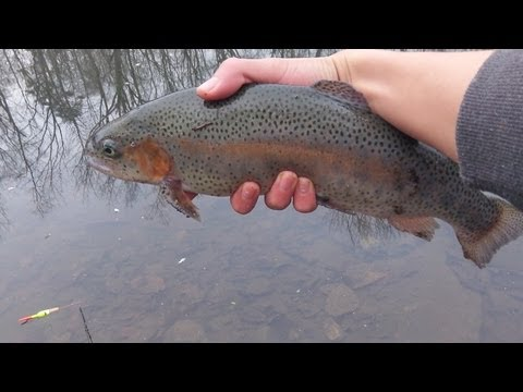 NJ Winter Trout Fishing 2012