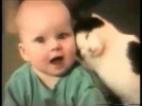 Gatti pazzi il ritorno!! funny cats 2