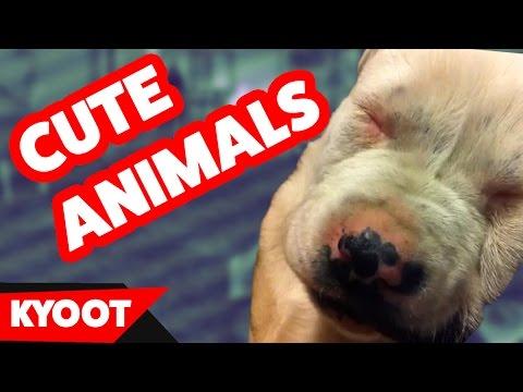 Animal amp pet business name generator