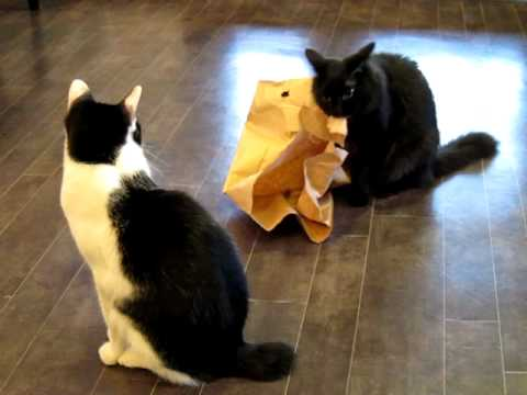 Felis  - Ristorante and Cat Lounge - Cats and Paper Bags