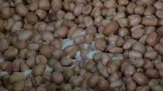 The One and Only Machine to fry Groundnuts – Must Watch – RedPix24x7