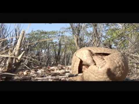 As figuras rupestres da Serra da Capívara, no Piauí - Jornal Futura - Canal Futura